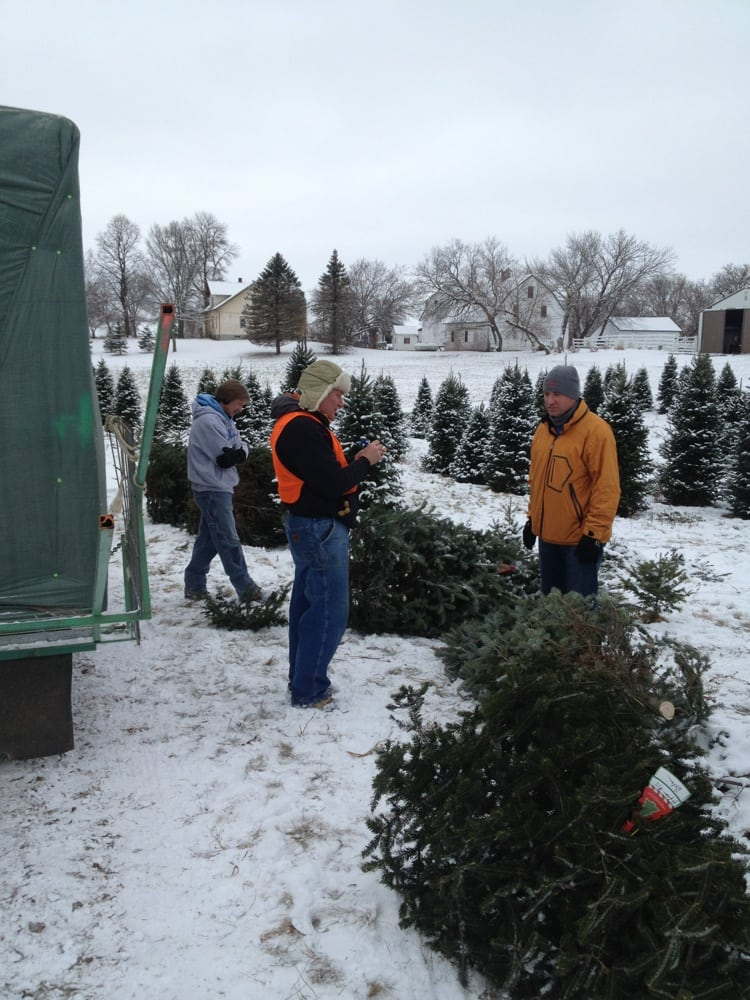 Z's Tree's Christmas Trees: 10850 110th St, Cologne, MN