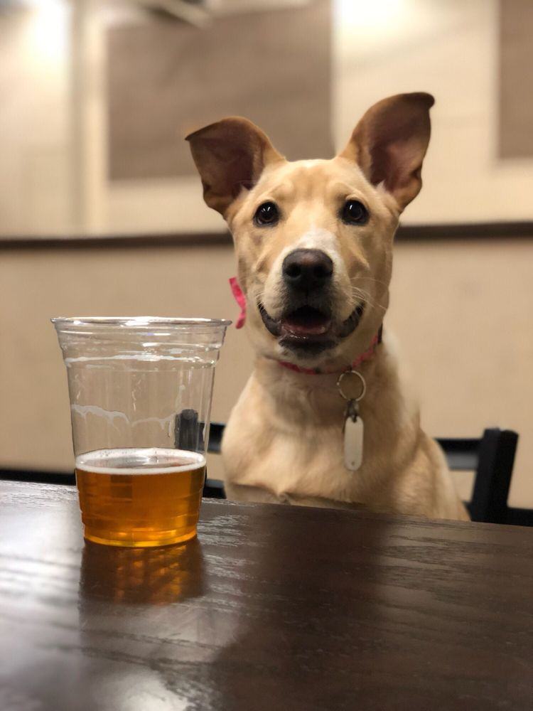 Lucky Dog Bark & Brew Charlotte