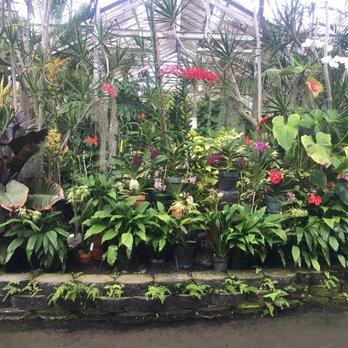 Foster botanical garden 1410 photos 154 reviews botanical gardens 180 n vineyard blvd for Foster botanical garden honolulu