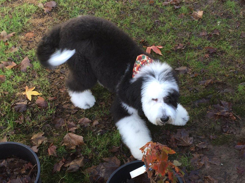Stinky Dog Grooming: 412 SE Jackson, Roseburg, OR