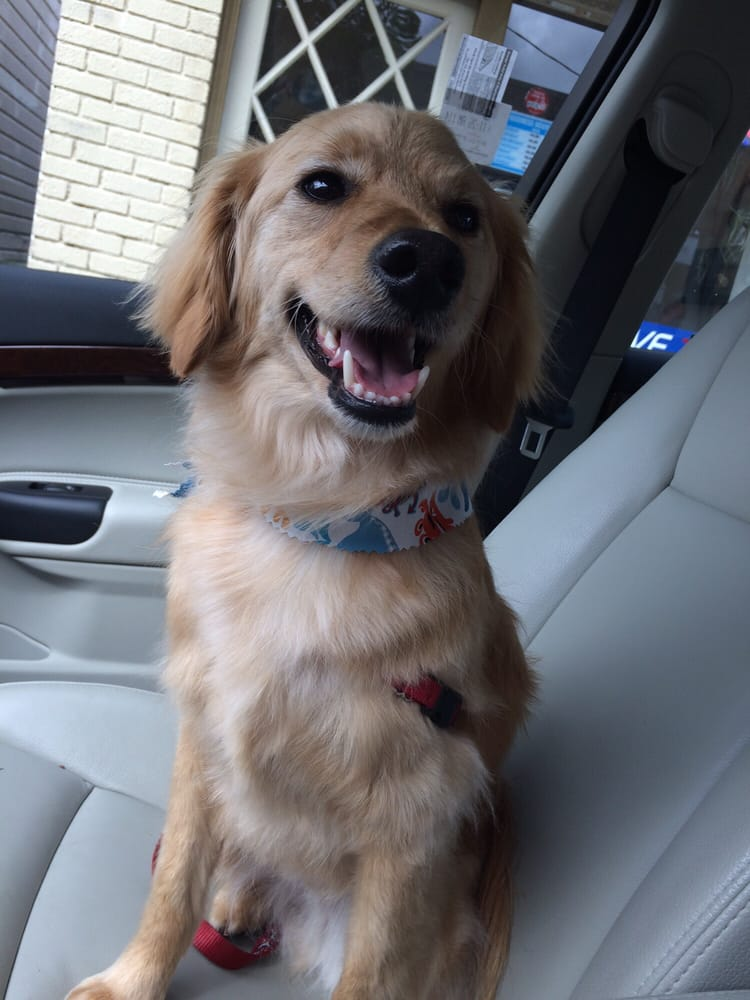 Jesse is happy with his new cut yelp for 4 paws grooming salon