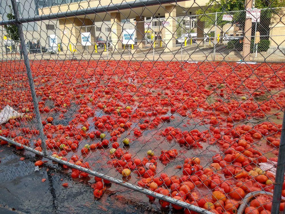 Tomato Romp!