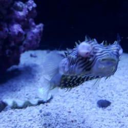 Nice Photo Of The Ocean Floor   Phoenix, AZ, United States
