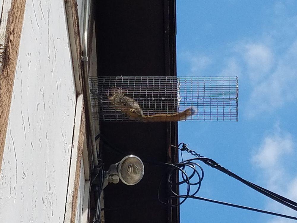 Skunk Bait Wildlife Control - Get Quote - Pest Control - 3274 Ranch ...