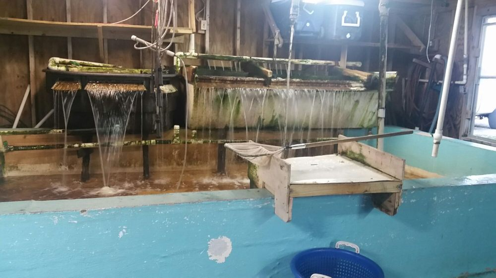 Fishermen's Friend Bait Shop: 314 Marina Rd, Chalmette, LA