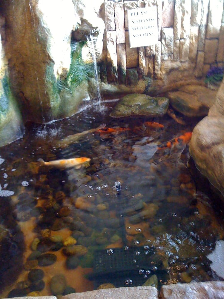 Indoor koi pond yelp for Indoor koi pool