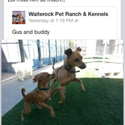 Waiterock Kennels - 50 Reviews - Pet Sitting - 18 S Acres Rd