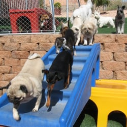 Red rock pet resort 10 reviews pet boarding pet for Red dog daycare
