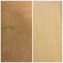 Photo Of Action Carpet Cleaning Torrance Ca United States After Stained