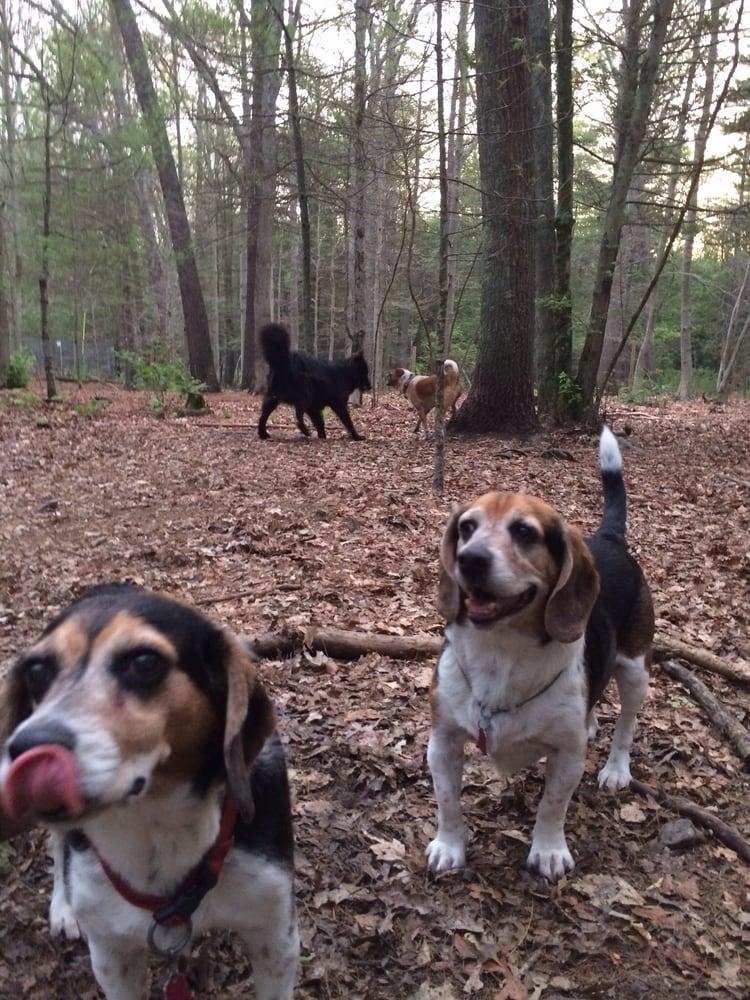 Hidden Acres Kennel - 19 Photos & 27 Reviews - Pet Sitting