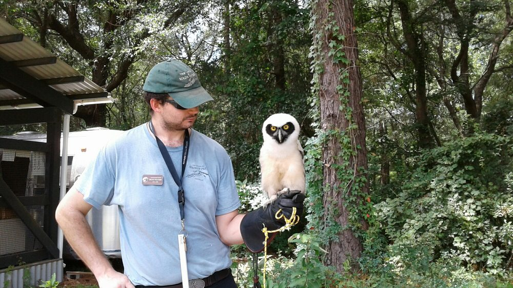 The Center for Birds of Prey: 4179 Highway 17 N, Awendaw, SC