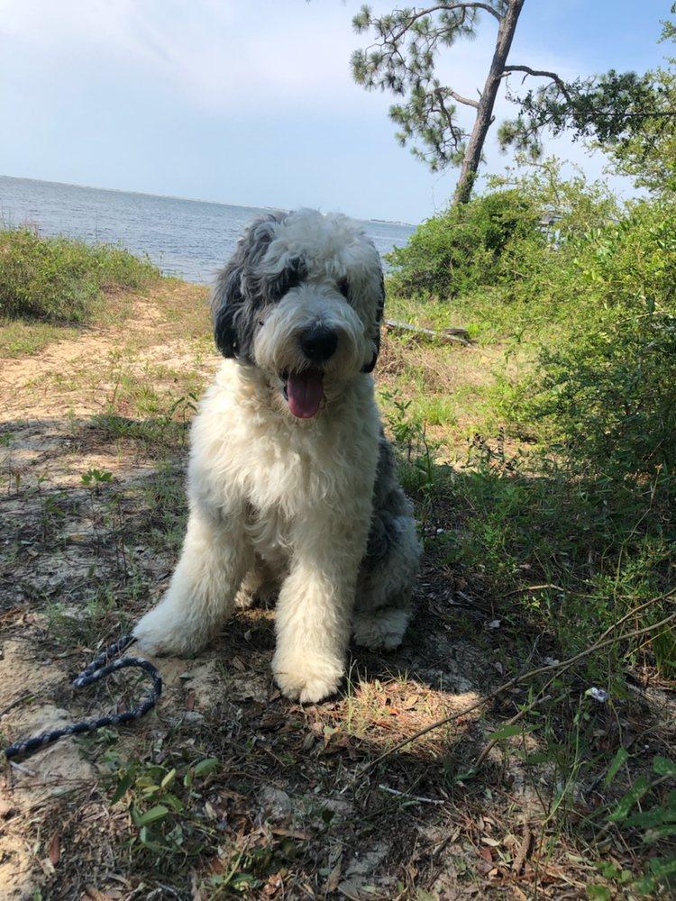 CATHY'S DOGGY DAZE: 3211 Gulf Breeze Pkwy, GULF BREEZE, FL