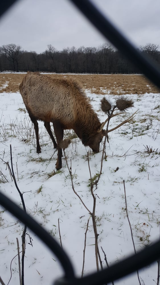 Busse Forest Elk Pasture