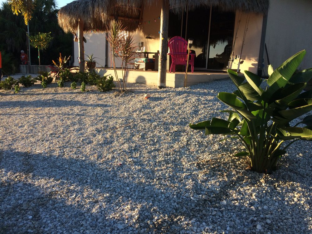 Palm Trees Plus: Punta Gorda, FL