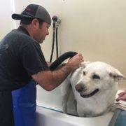 Shampoochez self service dog wash 23 photos 55 reviews pet photo of shampoochez self service dog wash santa cruz ca united states solutioingenieria Image collections
