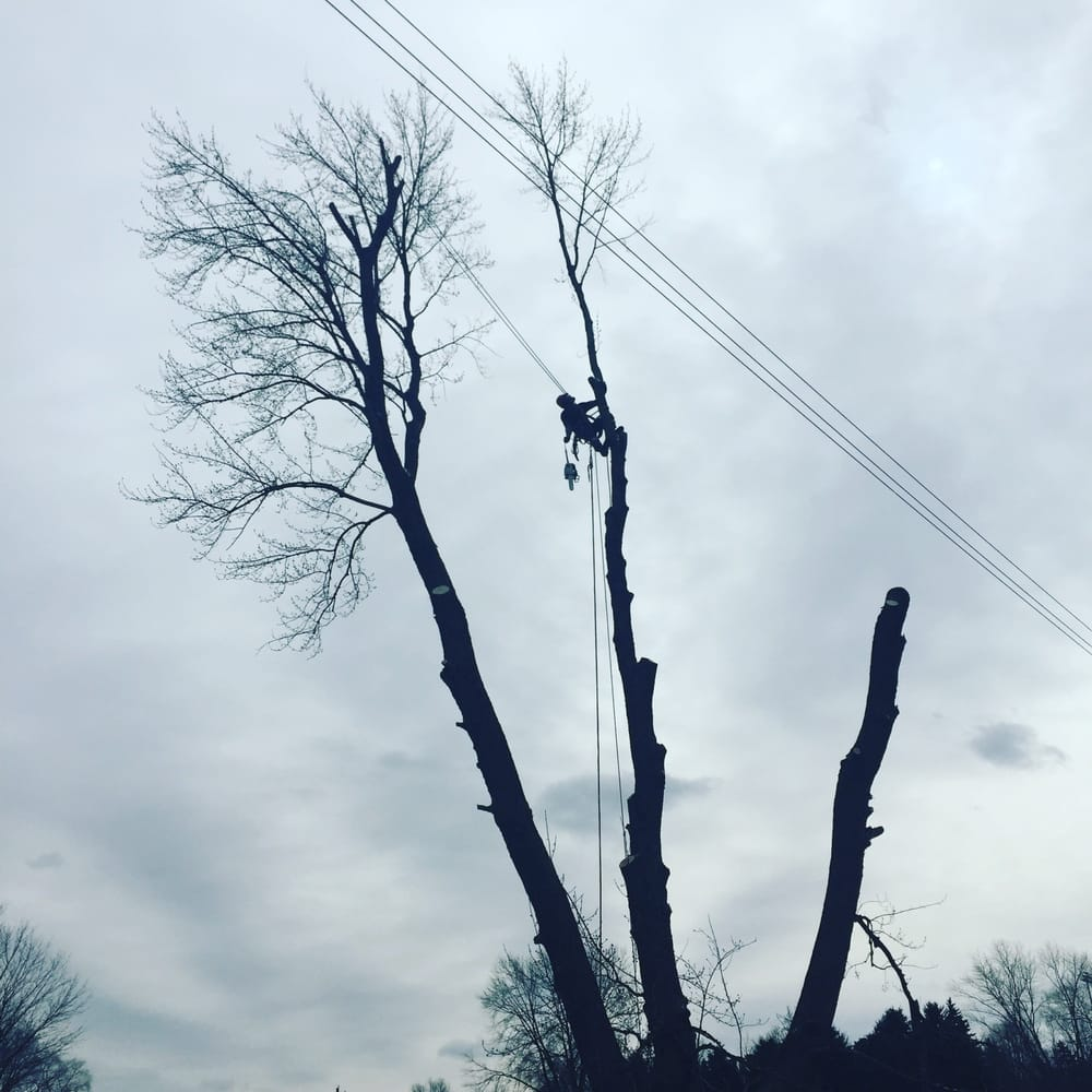 Klar Tree Service: 4305 E Middletown Rd, New Middletown, OH
