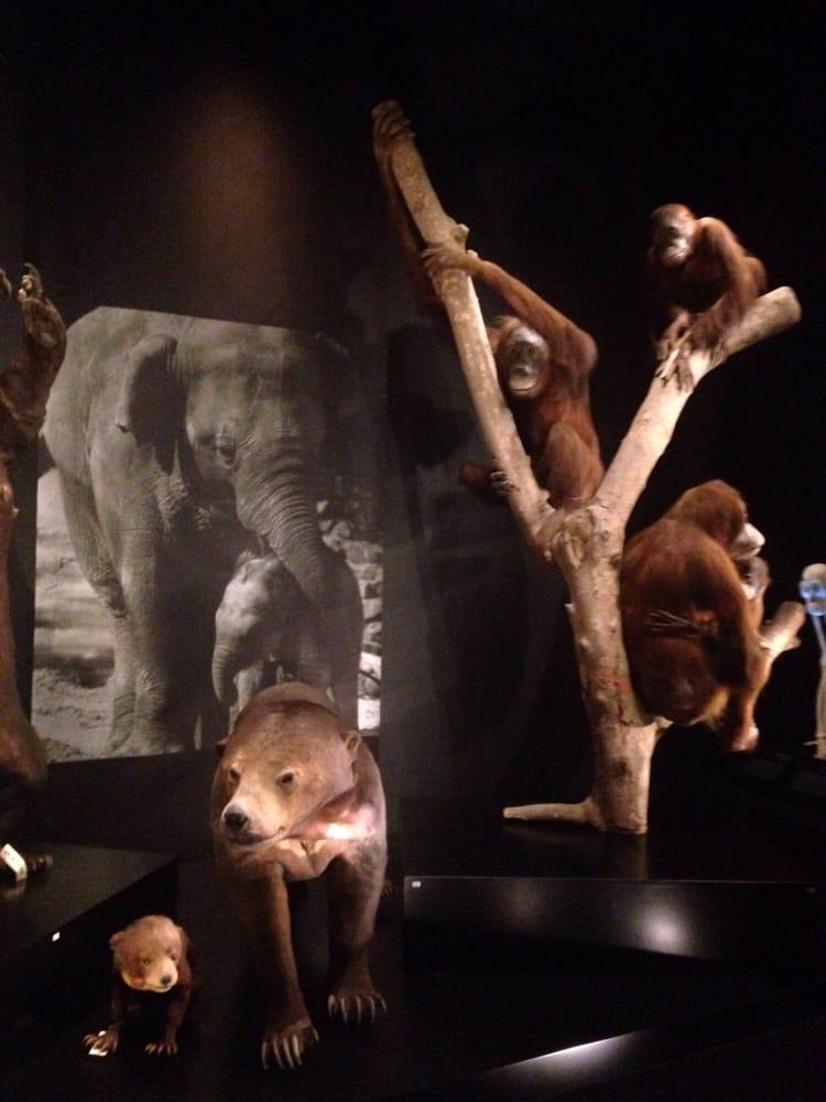 Lee Kong Chian Natural History Museum