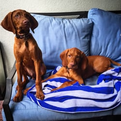 Photo Of Garden Veterinary Clinic   Winter Park, FL, United States. These  Two
