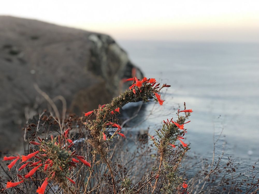 Channel Islands National Park: Ventura, CA