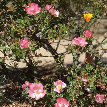 photo of the berkeley rose garden berkeley ca united states - Berkeley Rose Garden