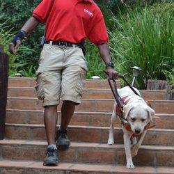 Pro Train Innovative Dog Training 13 Photos 32 Reviews Pet