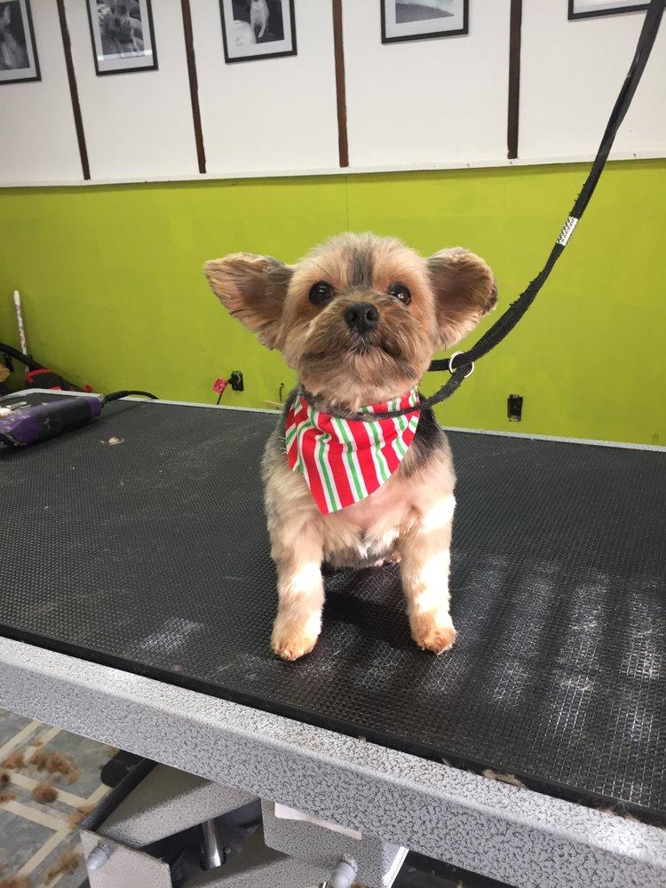 The Paw Spaw Dog Grooming: 1065 W Eldorado St, Decatur, IL