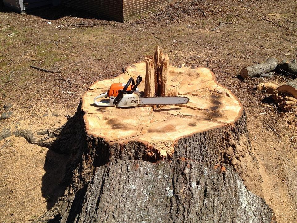 Hatchie Tree Service: Hernando, MS