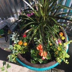 Pike Nurseries Nurseries Gardening 2475 Towne Lake Parkway