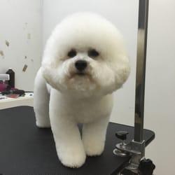 Princess princess dog grooming studio 17 photos pet groomers photo of princess princess dog grooming studio lexington ky united states solutioingenieria Choice Image
