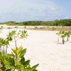 how to get to isla blanca from cancun
