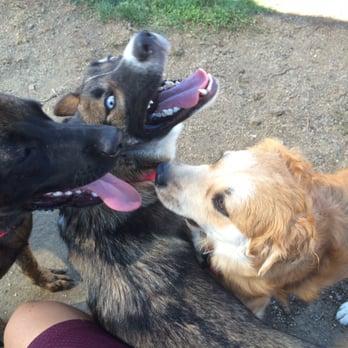 Vallejo Dog Parks