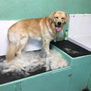 Sandy paws self service dog wash 37 photos 12 reviews pet photo of sandy paws self service dog wash bradenton fl united states solutioingenieria Choice Image