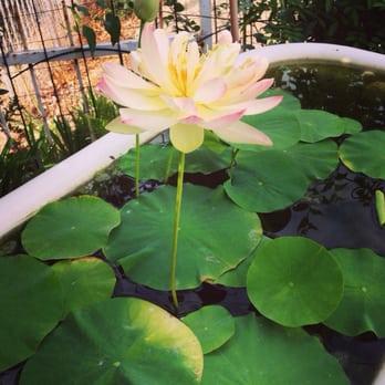 Photo Of Van Ness Water Gardens   Upland, CA, United States. My Amazing