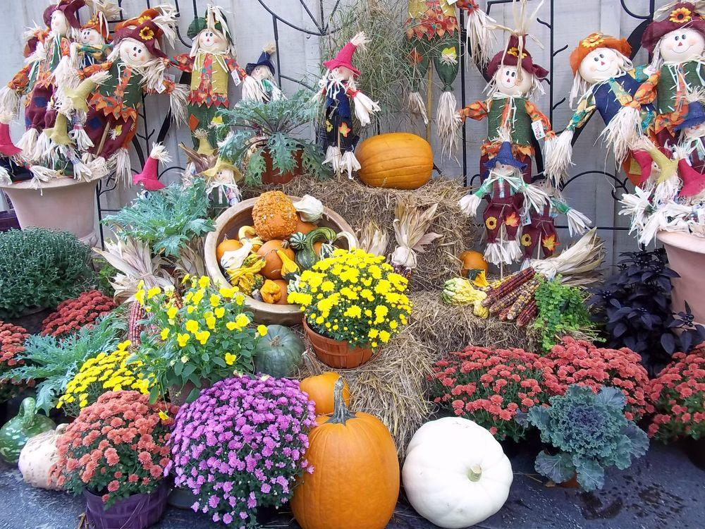 Homewood Nursery & Garden Center