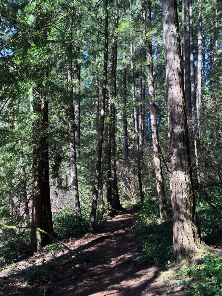 Pacific Northwest Beauty At Battle Ground Lake State Park