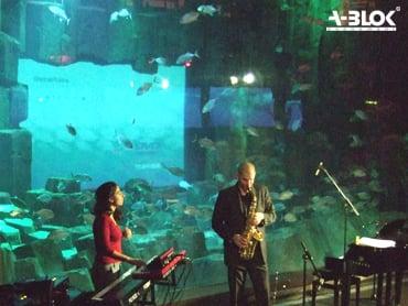 l aquarium bo 238 te de nuit club 5 ave albert de mun trocad 233 ro i 233 na