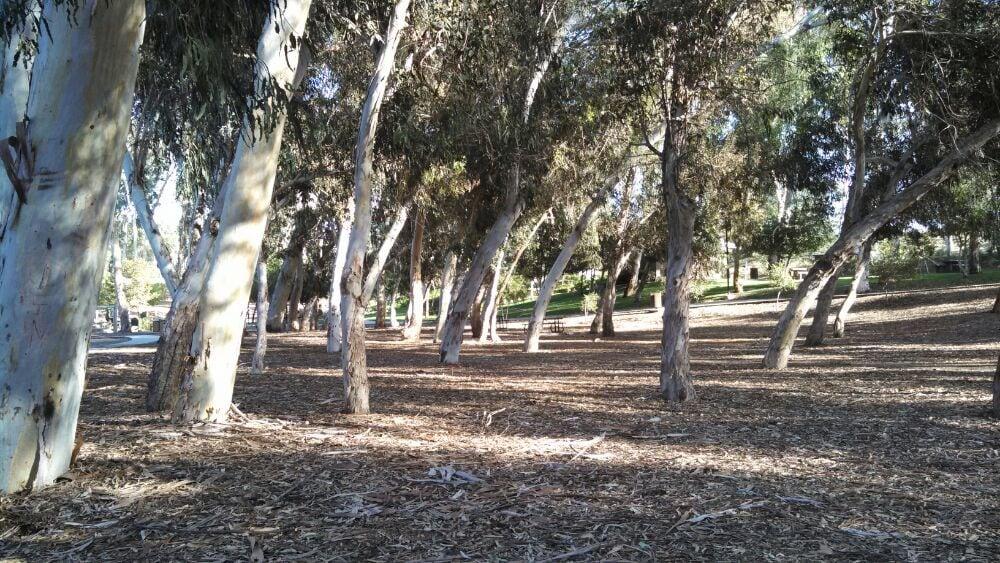 Eucalyptus grove yelp for Forest grove plumbing