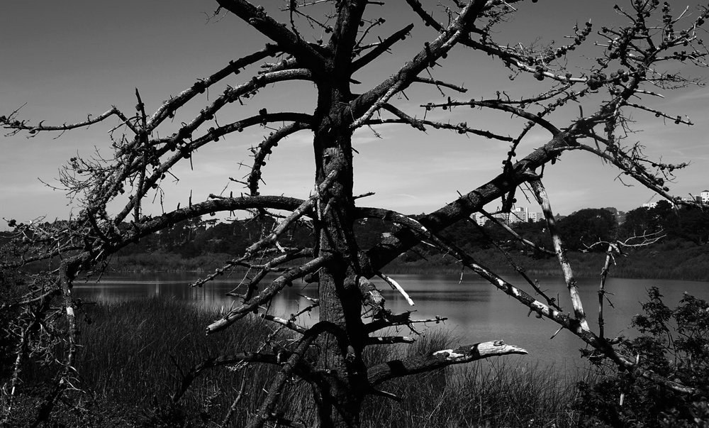 Lake Merced: 1 Harding Rd, San Francisco, CA