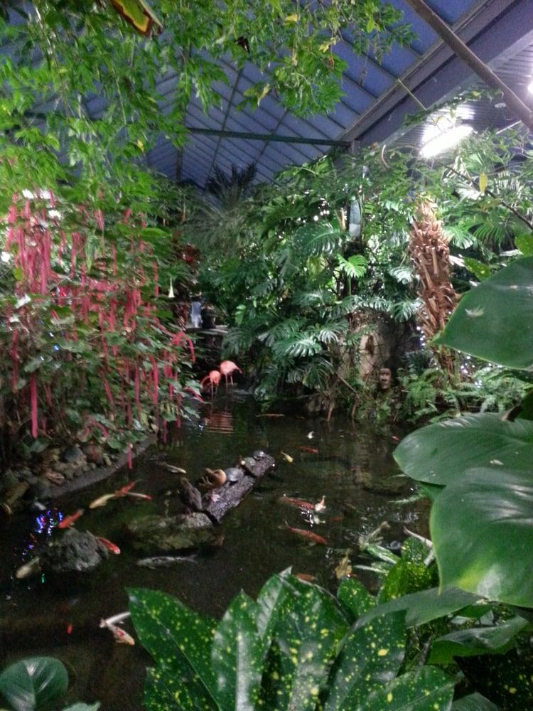 Pink Flamingos And Lots Of Fish Yelp
