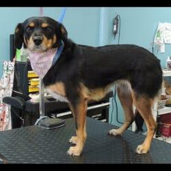 Noah's Bark Grooming - 12 Photos & 13 Reviews - Pet Sitting - 5706 ...