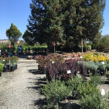 Photo Of Urban Tree Farm Nursery Fulton Ca United States