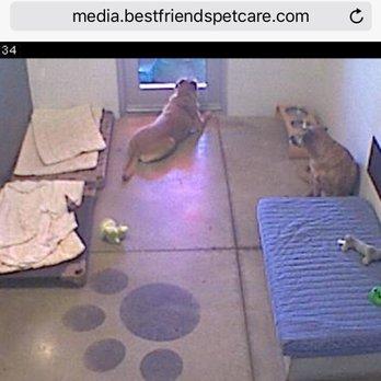 Best friends pet care at walt disney world resort 94 for Pet boarding near disney world