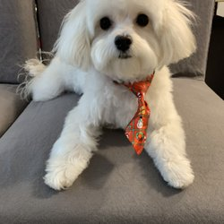 Toy Puppies Inc - 5121 SW 111th Ter, Davie, FL - 2019 All You Need