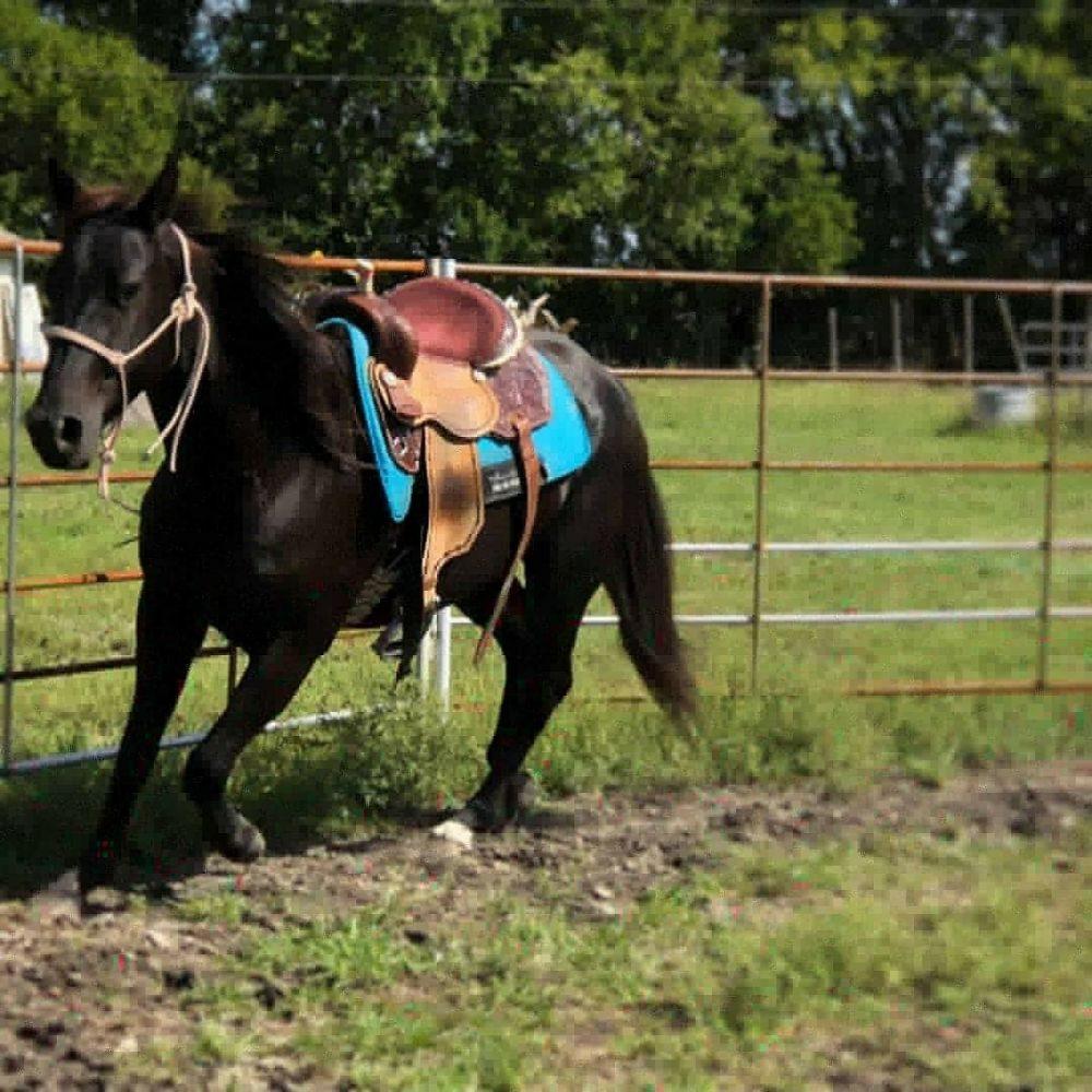 BH Equine Services: 1436 County Rd 4243, De Kalb, TX