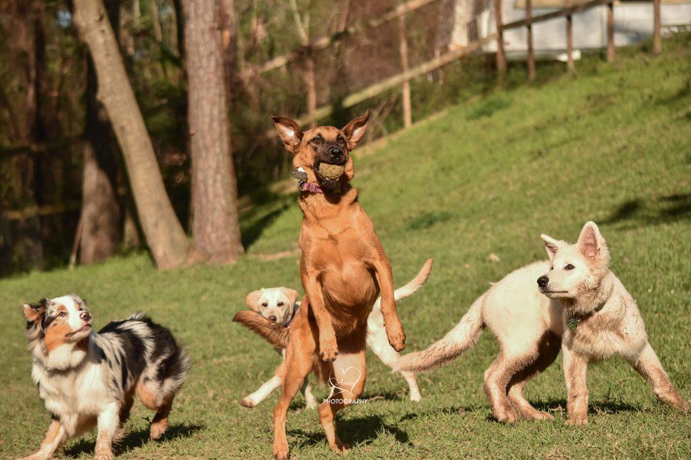 Barking Springs Dog Ranch