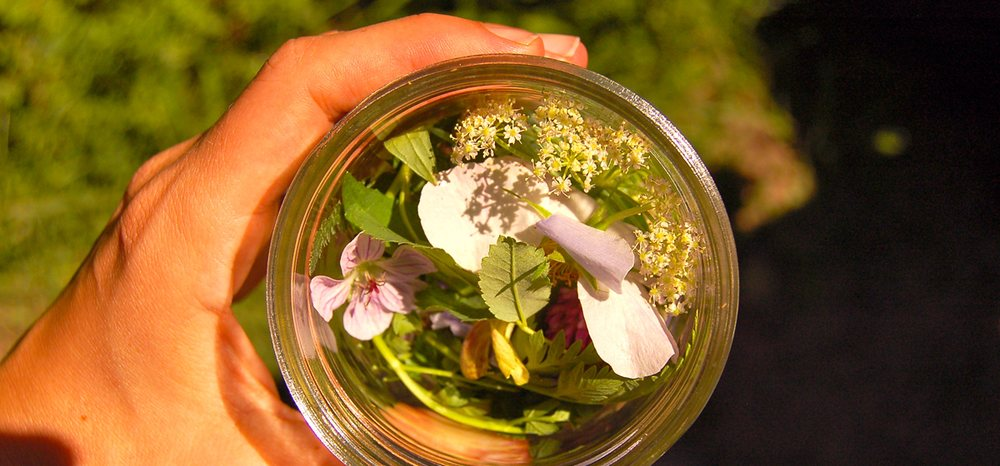 Herbalism Roots - Herbal Apothecary and Herbalism School: 1221 Galapago St, Denver, CO