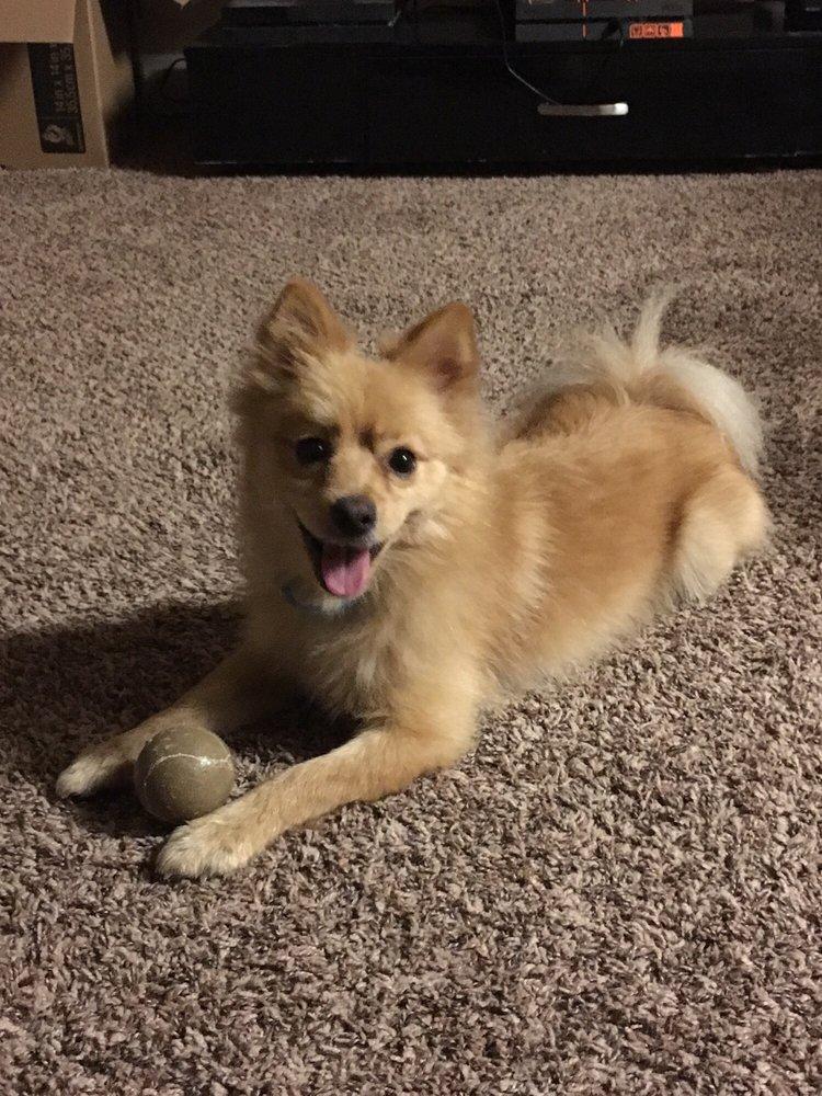God S Dog Rescue Pet Adoption San Antonio Tx Last