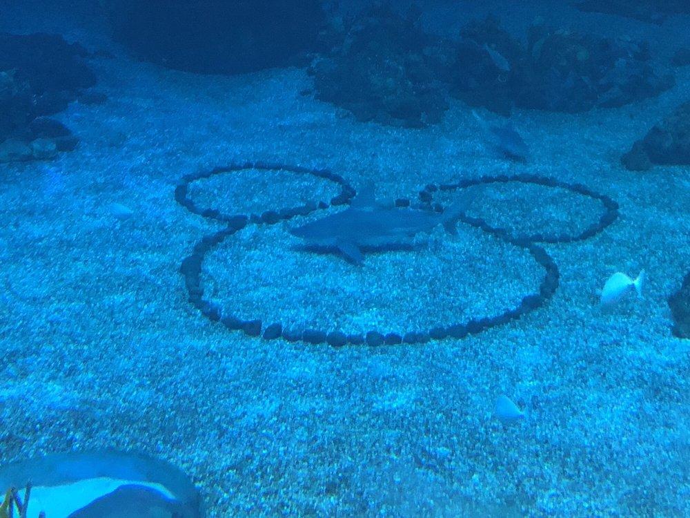 Epcot Dive Quest: Walt Disney World, Lake Buena Vista, FL
