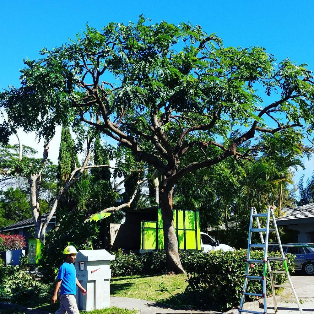 MonkeyMan Tree Care