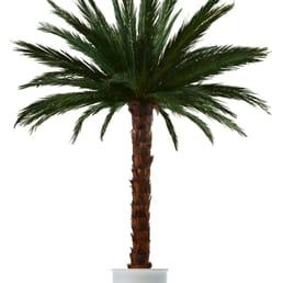 wir bringen sie auf die palme g rtnerei gartencenter simplonstr 14. Black Bedroom Furniture Sets. Home Design Ideas